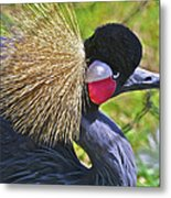 Bird Exotica  Metal Print