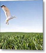 Bird Flying Over Green Grass Metal Print
