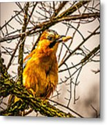 Bird Holding Food In Mouth Metal Print