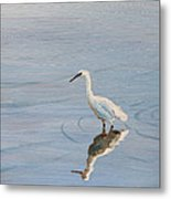 Bird In A Pond Metal Print