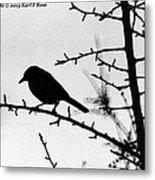Bird In B And W Metal Print