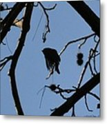 Bird In Flight Metal Print