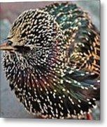 Bird In Seattle Metal Print