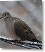 Bird In Snow - Animal - 011310 Metal Print