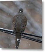 Bird In Snow - Animal - 01135 Metal Print by DC Photographer
