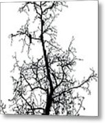 Bird In The Branches Metal Print