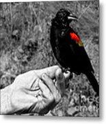 Bird In The Hand.seattle.bw Metal Print
