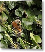 Bird In The Ivy Metal Print