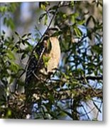 Bird In Trees Metal Print