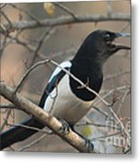 Bird Magpie Metal Print