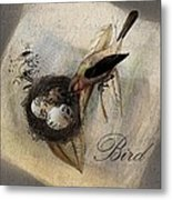 Bird Nest - Sp11ac02 Metal Print