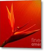 Bird Of Paradise - Flora - Flower Metal Print