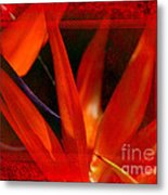 Bird Of Paradise Flower 5 Metal Print