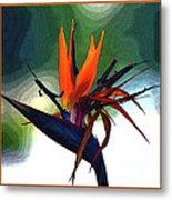 Bird Of Paradise Flower Fragrance Metal Print