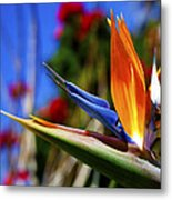 Bird Of Paradise Open For All To See Metal Print