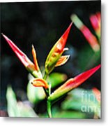 Bird Of Paradise Plant Metal Print