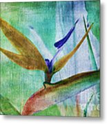 Bird Of Paradise Watercolor Metal Print