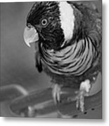 Bird On A Chain Metal Print