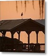 Bird On A Hot Tin Roof Metal Print