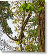Bird On A Vine In Jungle Forest In Chitwan Np-nepal  Metal Print