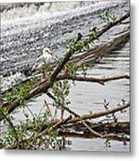 Bird On A Weir Metal Print