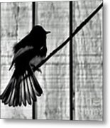 Bird On A Wire I Metal Print
