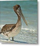 Bird On The Beach Metal Print