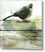 Bird On The Deck Metal Print by Artist and Photographer Laura Wrede
