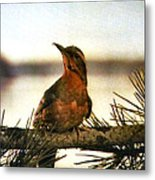 Bird On The Wire Metal Print