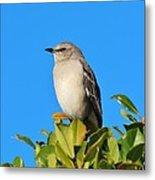 Bird On Tree Top Metal Print