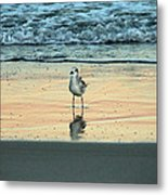 Bird Reflection Metal Print