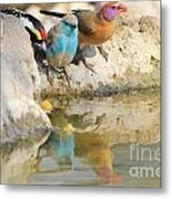 Bird Reflection Of Beauty Metal Print