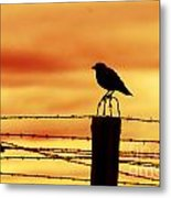 Bird Sitting On Prison Fence Metal Print