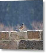 Bird Song Metal Print