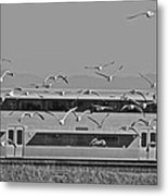Bird Train Alviso 2 Metal Print