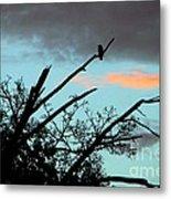 Bird Watching Sunrise Metal Print