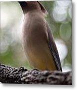 Bird With Bokeh Metal Print