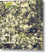 Birdcage In Blossom Metal Print