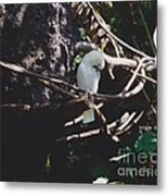 Birdie Sitting In The Tree Metal Print