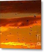Birds Against Sunset Sky Metal Print