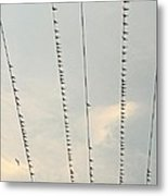 Birds And Wires Two Metal Print