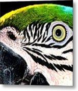 Bird's Eye View Metal Print
