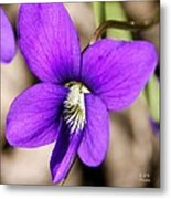 Birds Foot Violet Metal Print