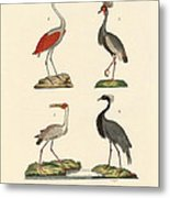 Birds From Hot Countries Metal Print