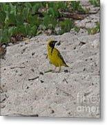 Birds - Ile De La Reunion - Reunion Island Metal Print by Francoise Leandre