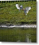 Birds In Fight Metal Print