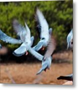 Birds In Flight 030515aa Metal Print