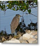 Birds In The Morning Metal Print