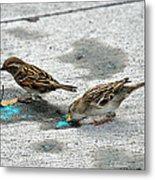 Birds Like Cotton Candy Metal Print