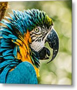 Birds Of A Feather Metal Print